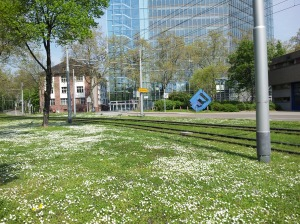 We found little white flowers scattered in-between the S-Bahn (streetcar) tracks...